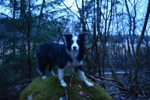 Metsä on täynnä erilaisia jumppavälineitä. Niitä kannattaa hyödyntää koiran kanssa lenkkeillessä. Samalla tulee tehtyä ulkoilusta molemmille osapuolille entistä mielenkiintoisempaa!