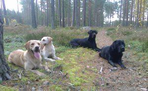 Kipeä koira erottuu usein joukosta. Silmiä ei pidä ummistaa, vaan luottaa siihen, mitä näkee.